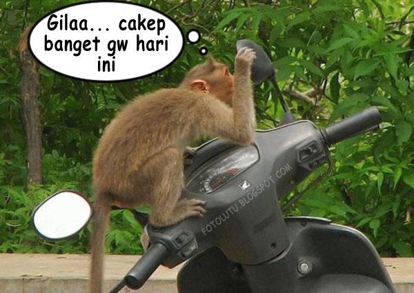 Monyet Narsis Udah Dong Nyet Jangan Ngaca Mulu.jpg